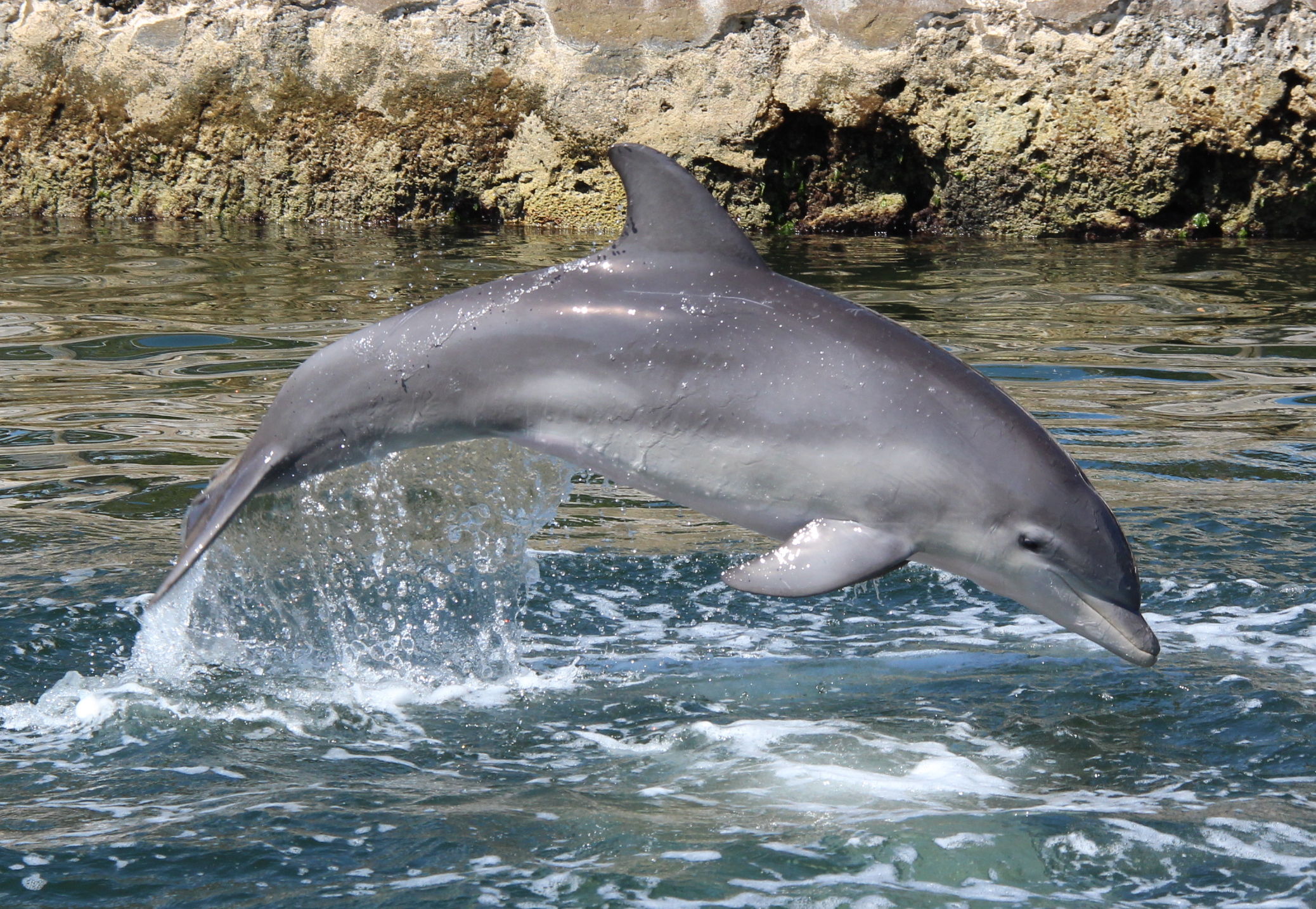 Photo 5-dolphin-jumping-natural-lagoon