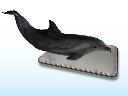 Dolphin Scale