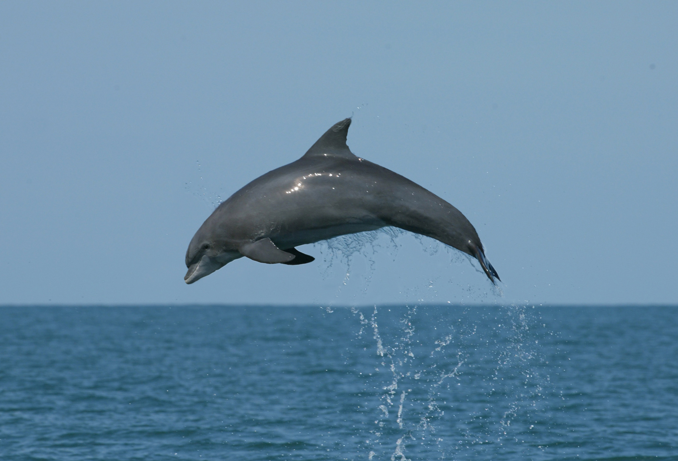 The DPMMR Journal: The Florida Keys Protect Wild Dolphins Program - Fall 2018