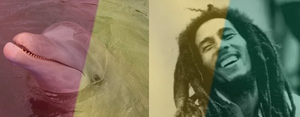 26 Fun Facts About Bob for his 26th