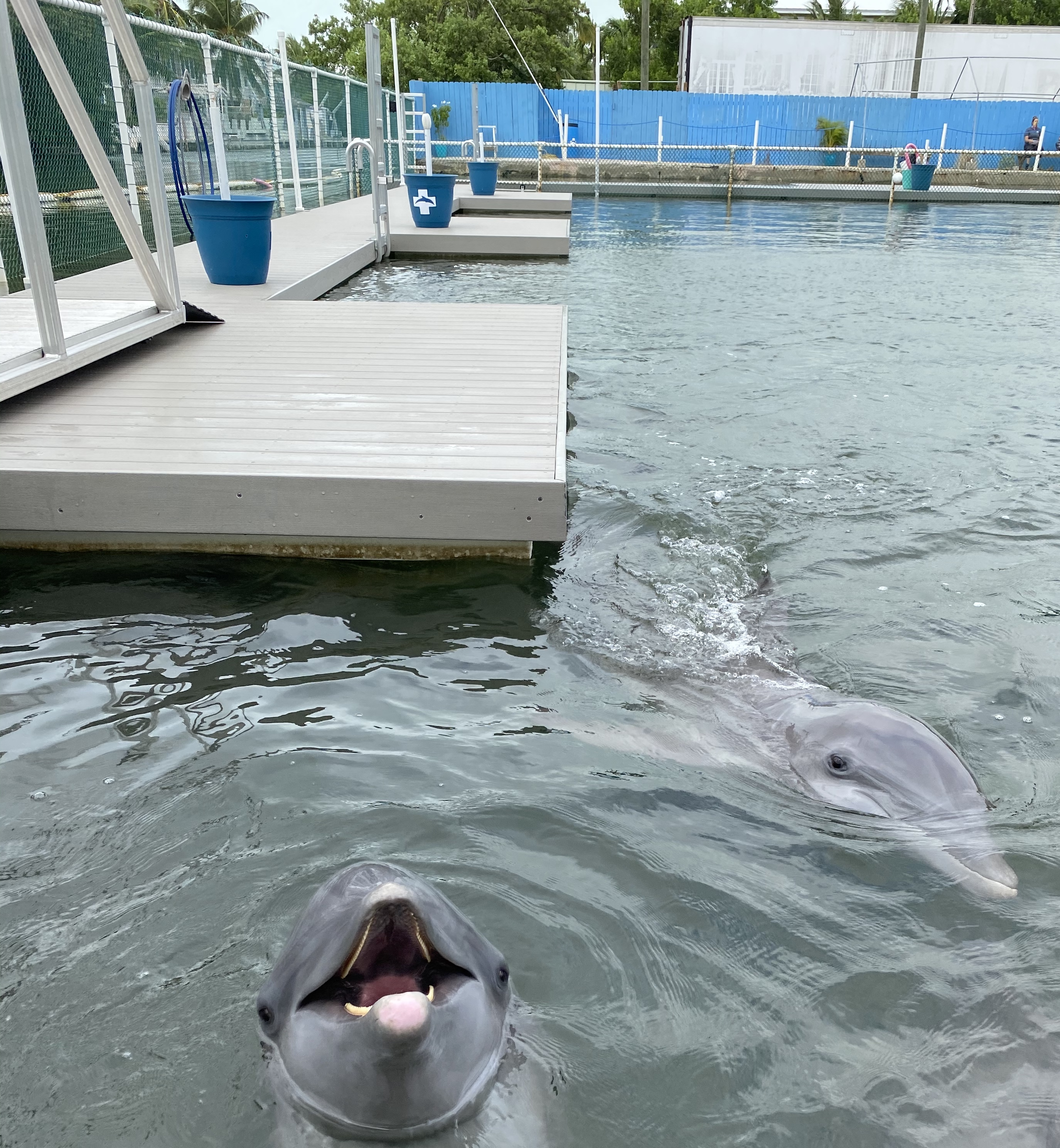 Dolphins Love AccuDock!